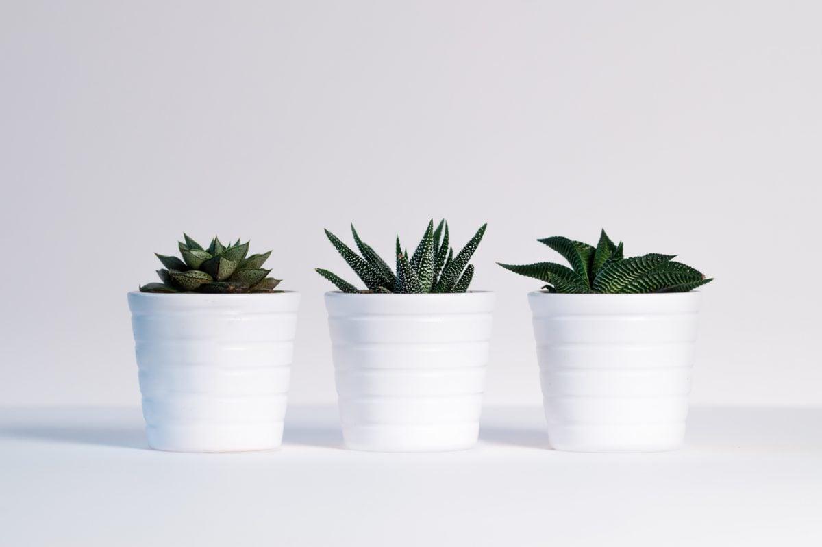 Las 5 plantas de interior que más duran